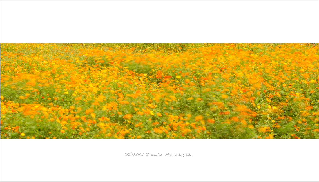 work-DSCF7724-10030.jpg